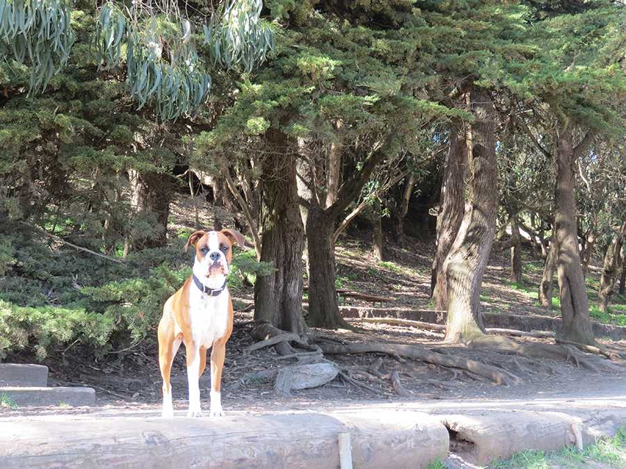 Dogs+and+humans+alike+enjoy+the+scenery.