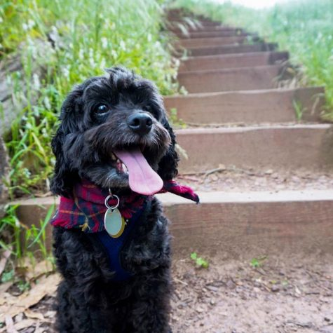 Fun places to walk your dog that aren't traditional dog parks