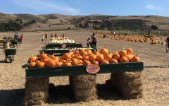 Bob's Pumpkin Farm – a quintessential autumn coastal experience