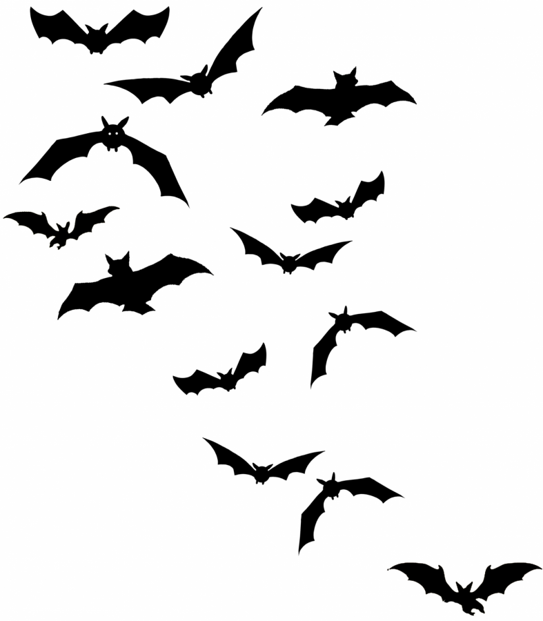 Bats+at+Halloween%3A+Setting+the+Record+Straight